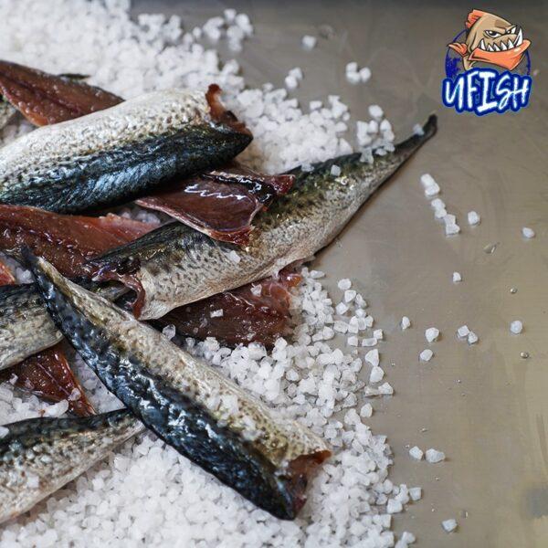 Slimey Fillets - BRINED BEACH WORMS X2 Brined Baits Fishing Bait Shop Newcastle - UFISH Brined Baits