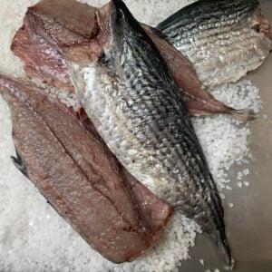 BONITO FILLETS - Brined Baits Fishing Bait Shop Newcastle - UFISH Brined Baits